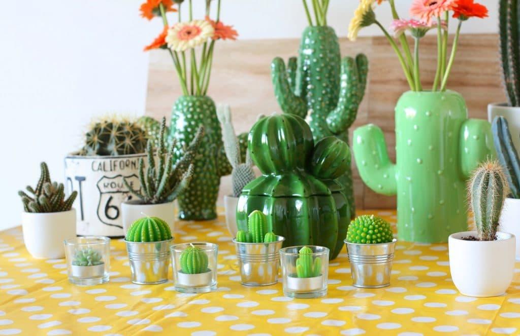 cactussen voor in huis