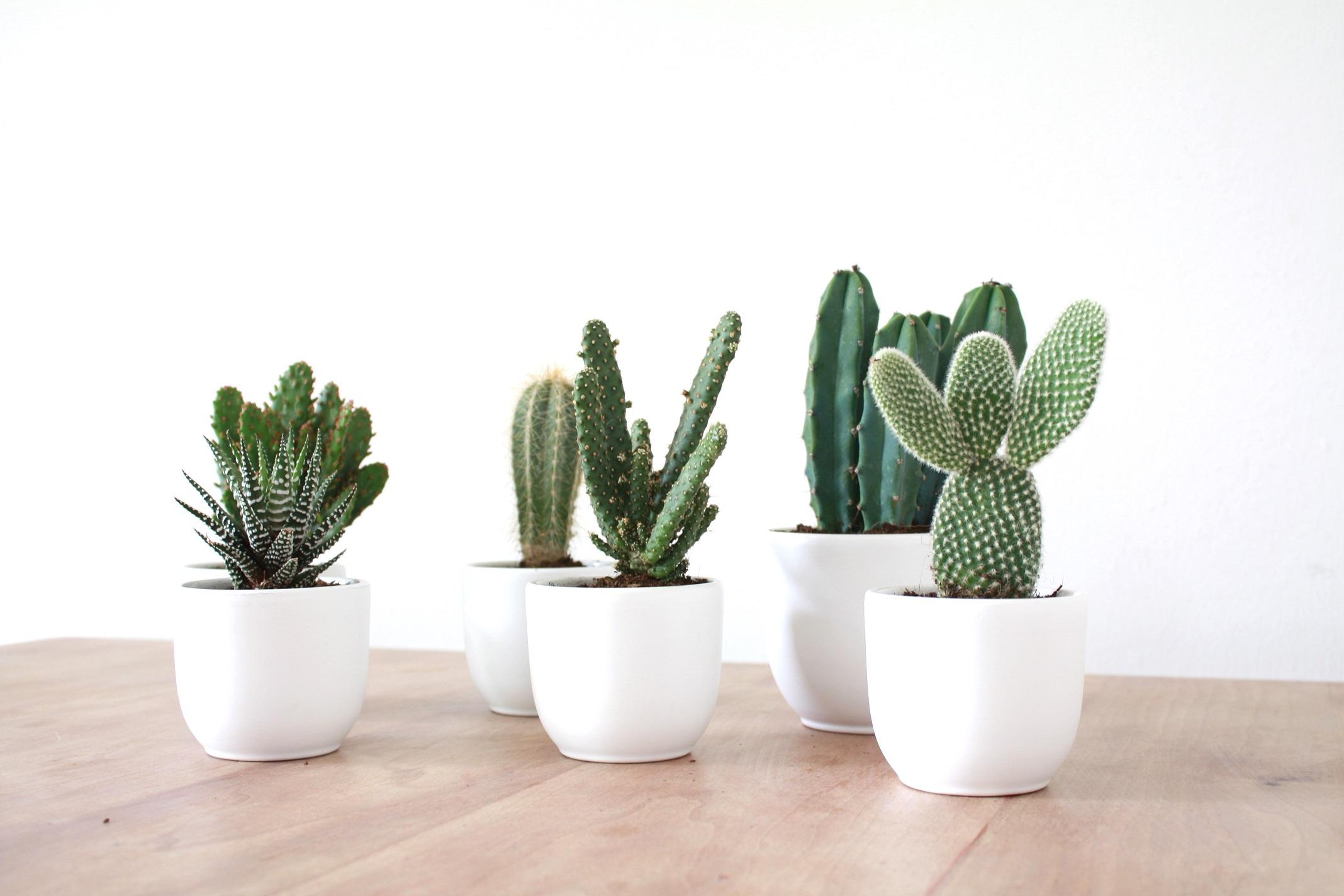 Small Pot Plants Wat Ik Al Heel Lang Wilde Zosammieenzo