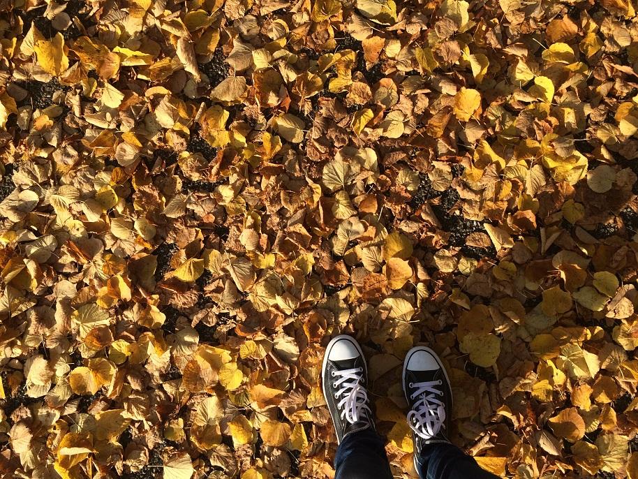 herfst zosammie