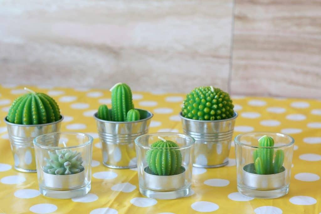cactus kaarsjes
