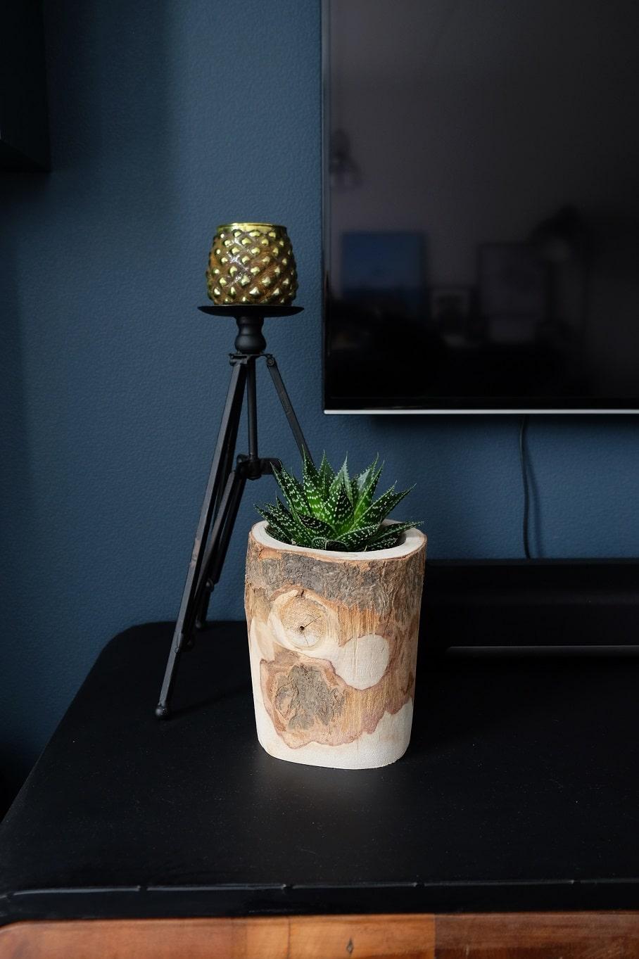boomstam plantenpot