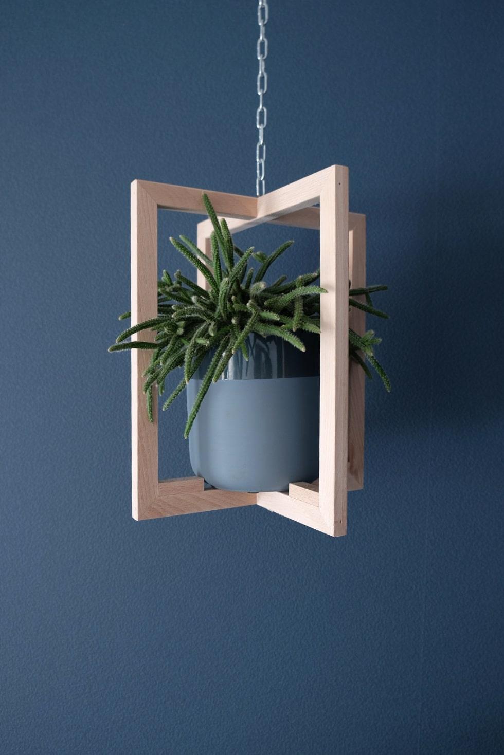 cactus hangplant