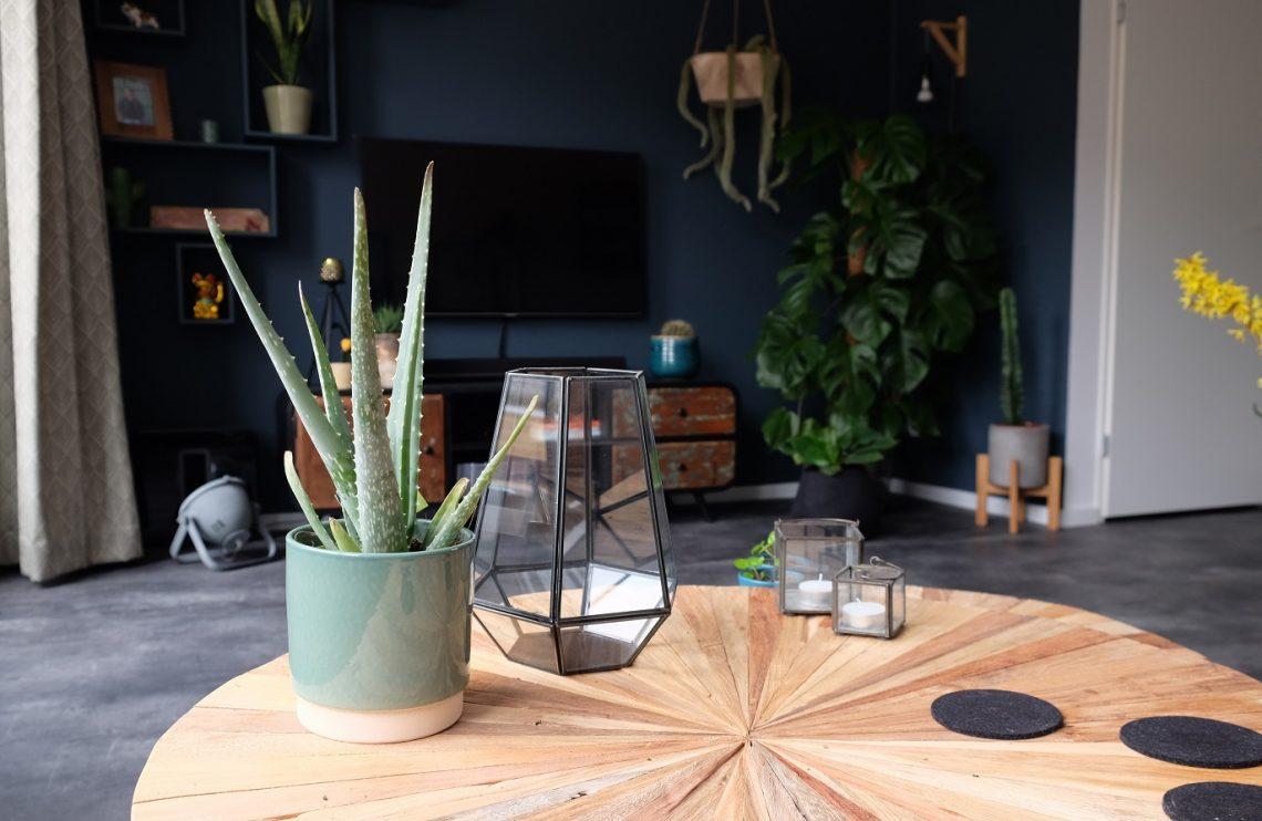nieuwe plant