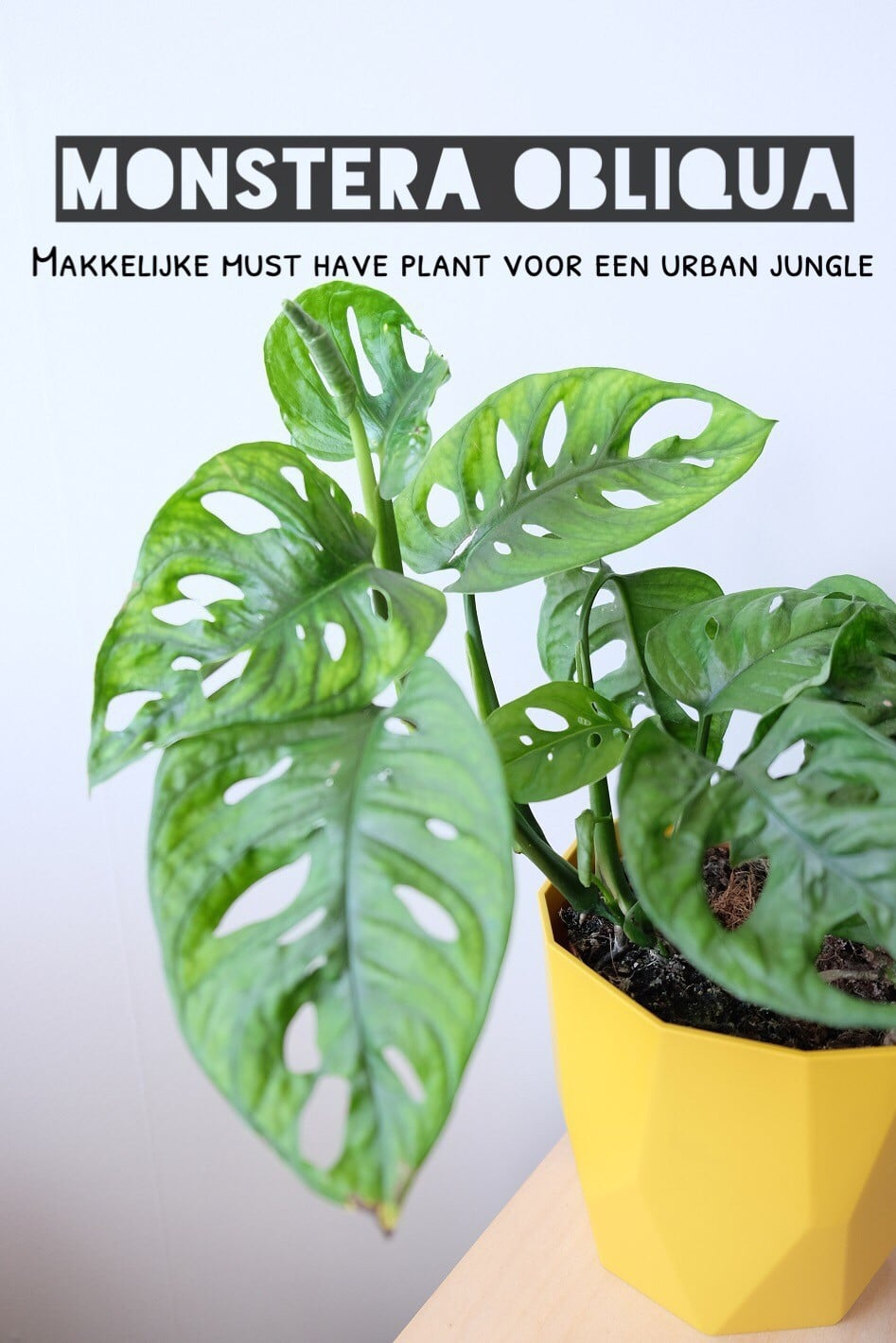 musthave plant urban jungle
