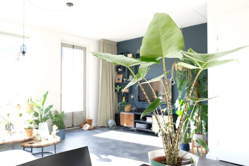 Urban jungle tips