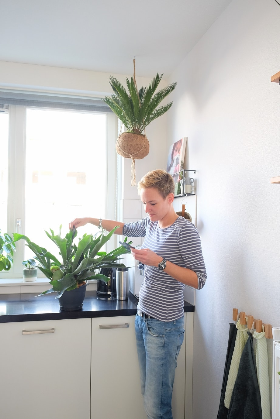 tips kamerplanten