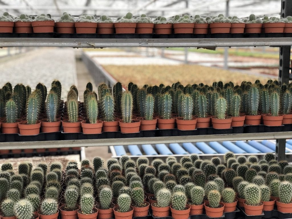 Cactuskwekerij
