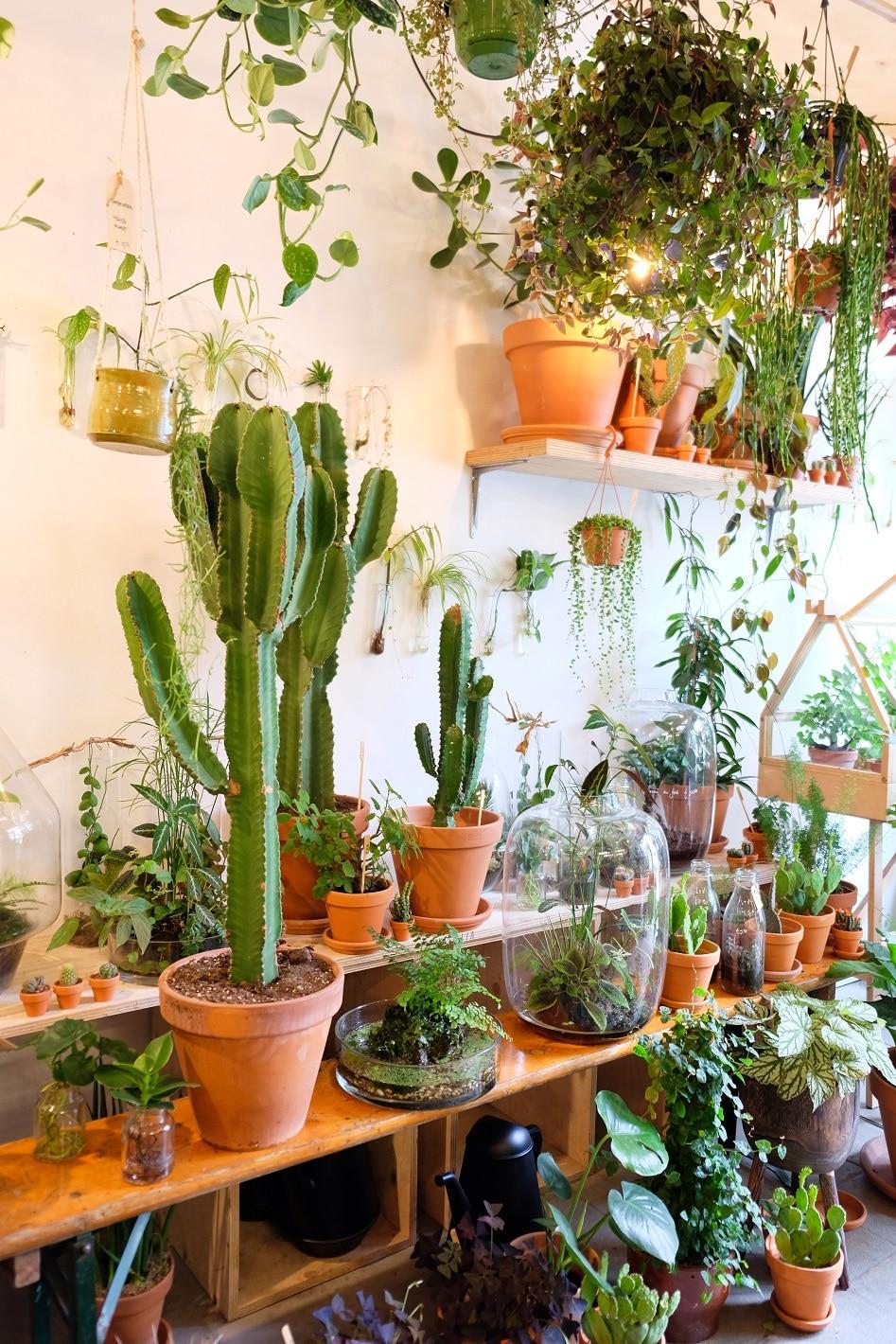 plantaardig plantenwinkel