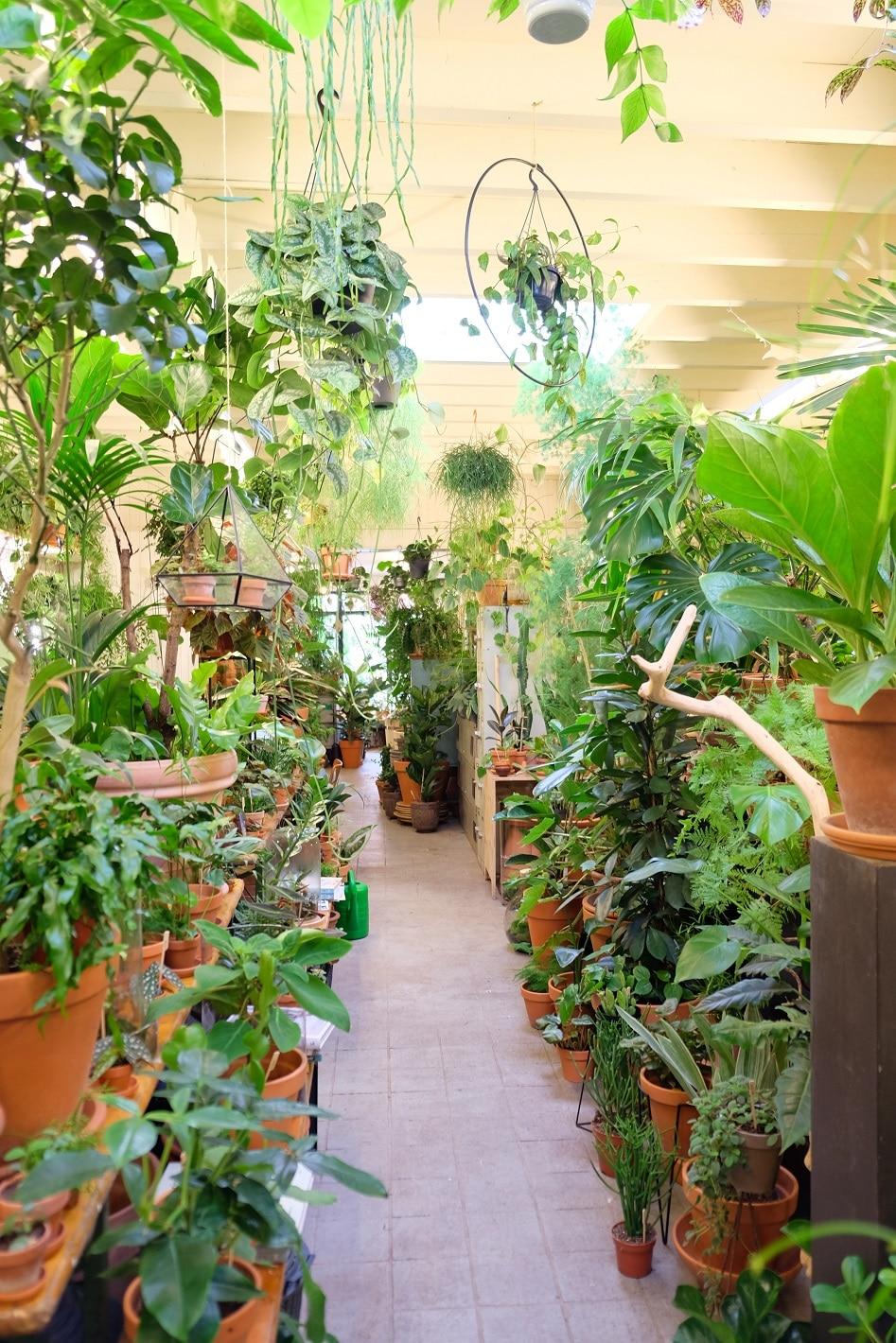 planten hotspot