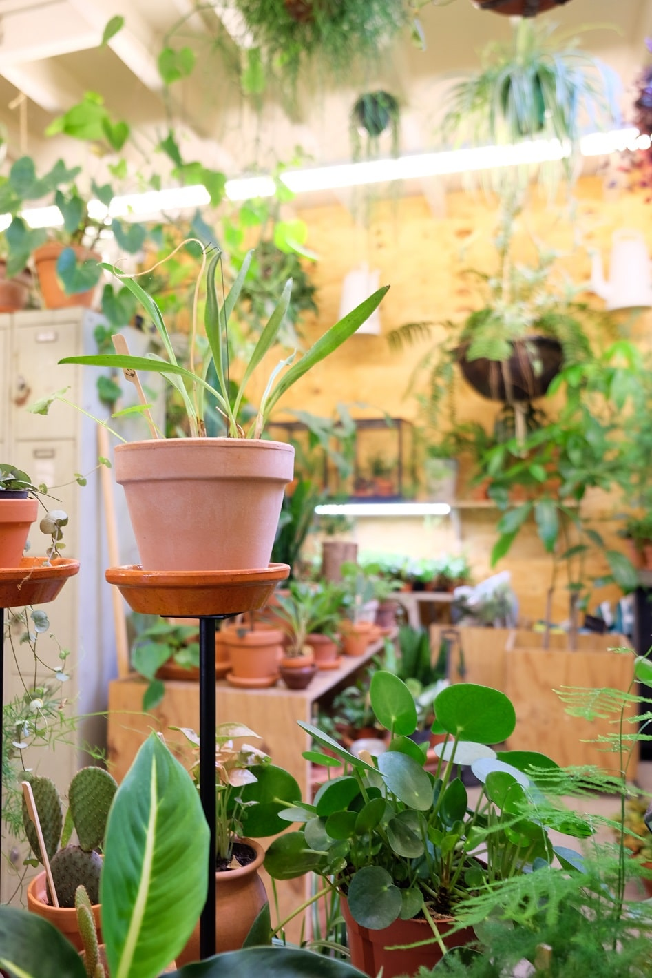 plantenwinkel Middelburg