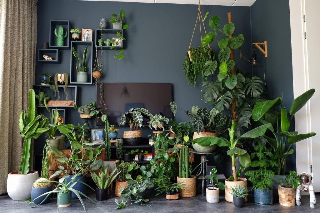 Botanische woonkamer